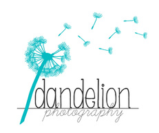 dandelion photography